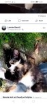 Have you found me calco kitten west cork