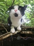 Lost black and white cat